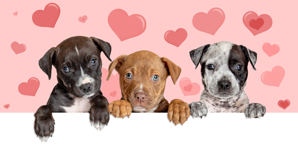 Puppy Socialisation and  Puppy Training Classes
