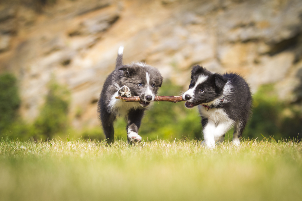 Common Styles of Dog Play