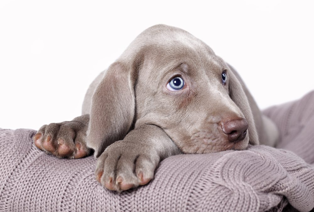 Are You Training Your Pup, or is Your Pup Training You?