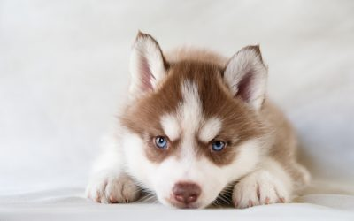 The Fear Period in Puppies